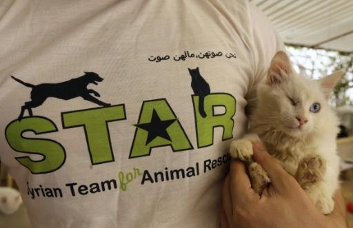 """Un bénévole syrien, membre de """"STAR, l'équipe syrienne pour le sauvetage des animaux"""", s'occupe d'un chaton recueilli dans un refuge à Sahnaya (près de Damas), le 18 octobre 2016 © LOUAI BESHARA AFP"""
