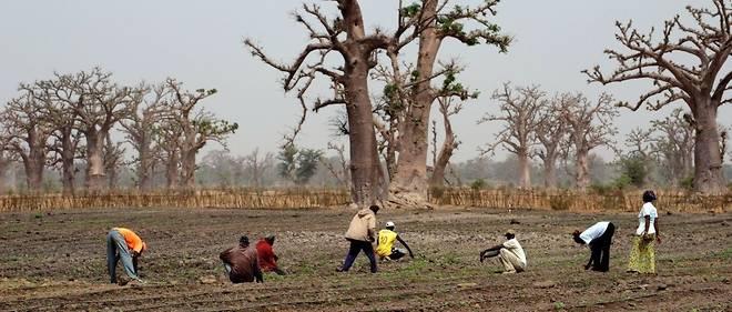 Le Sénégal est l'un des huits pays à bénéficier de l'aide du Fonds vert pour le climat.