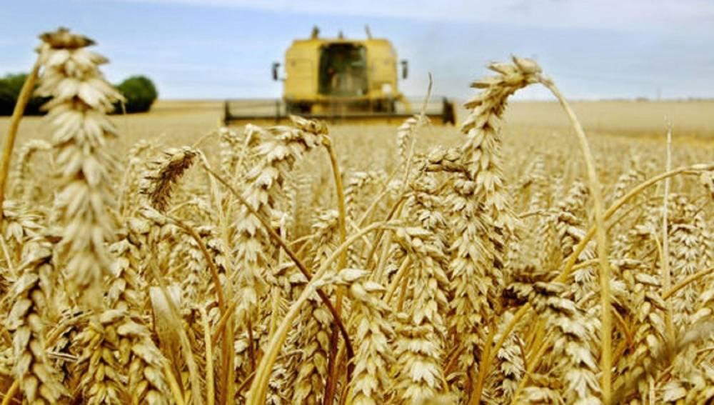 Avec 1 million d'hectares de céréales couverts, l'assureur joue un rôle clé dans la politique agricole marocaine. ©  DR
