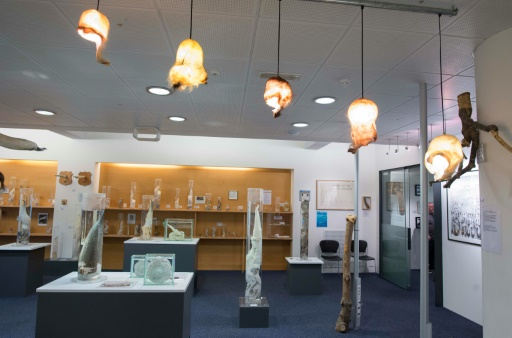 En 2011, la collection familiale du musée du phallus de Reykjavik s'est enrichie d'un pénis humain donné par un coureur de jupons islandais mort à 96 ans © Halldor KOLBEINS AFP/Archives