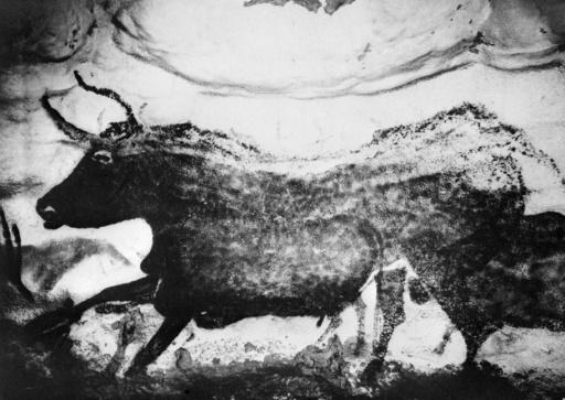 Photo non datée d'un des motifs vieux de 13.000 ans, peint sur une paroi de la grotte de Lascaux, dans la commune de Montignac.  ©  AFP/Archives