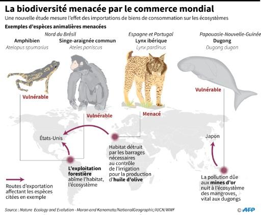 L'impact du commerce mondial sur la biodiversité © John SAEKI, Laurence CHU AFP