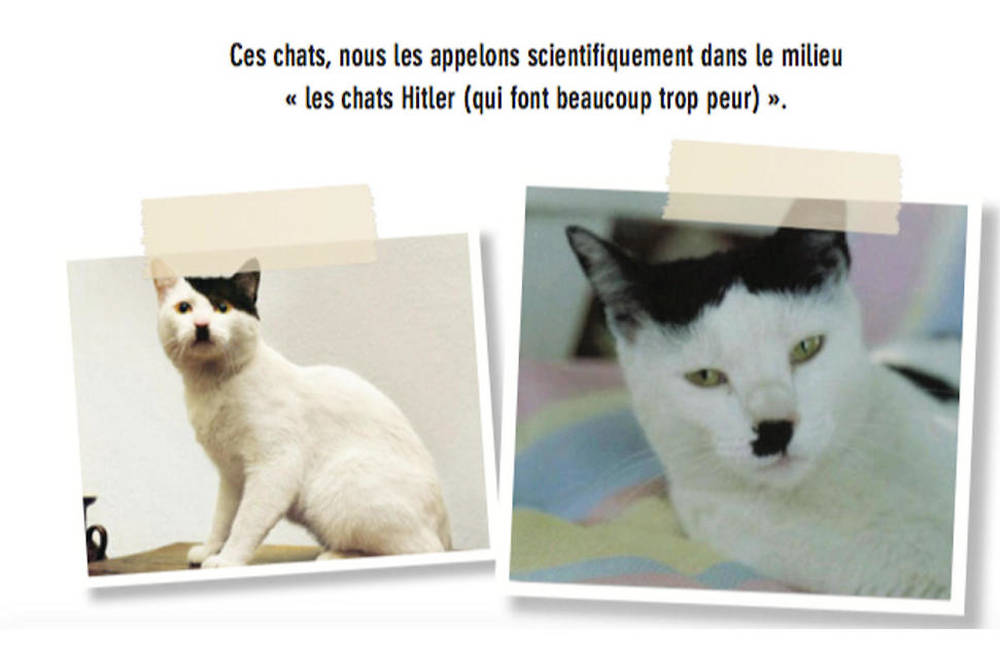 On l'appelle le kitler, le chat Hitler...