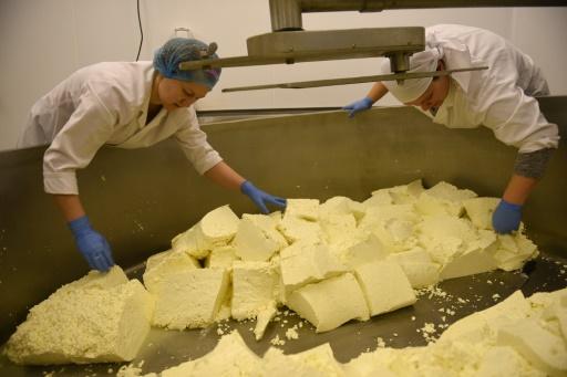 """Justyna Burford (g) et Daniella Welch (d) coupent et tranchent du lait caillé pour fabriquer le fromage """"Single Gloucester cheese"""", dans la ferme Charles Martell and Sons Ltd à Dymock, dans le comté de Gloucester, le 9 février 2017 © OLI SCARFF AFP/Archives"""