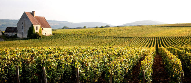 Maison  et vignes du cru Puligny-Montrachet en côte de Beaune. ©Philippe Roy