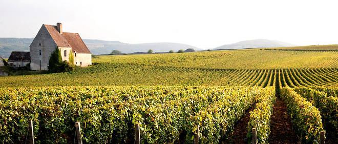 Maison  et vignes du cru Puligny-Montrachet en côte de Beaune.