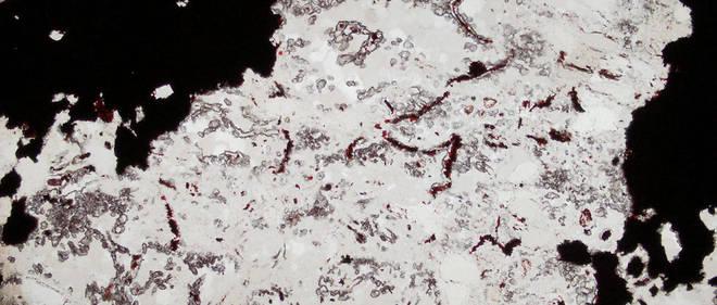 Une coupe des microfossiles détectés dans la roche de Nuvvuagittuq au Québec