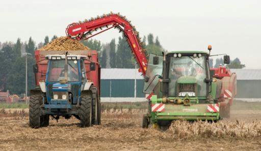 Récolte de pommes de terre près de Lille, le 23 septembre 2016 © DENIS CHARLET AFP/Archives
