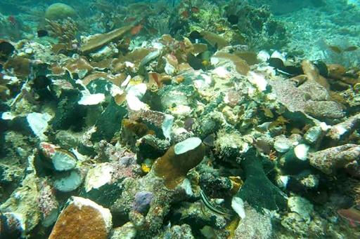 Un récif corallien endommagé par un bateau de croisière à Raja Ampat, en Indonésie, le 13 mars 2017 © BAKAMLA INDONESIA MARINE SECURITY AGENCY/AFP