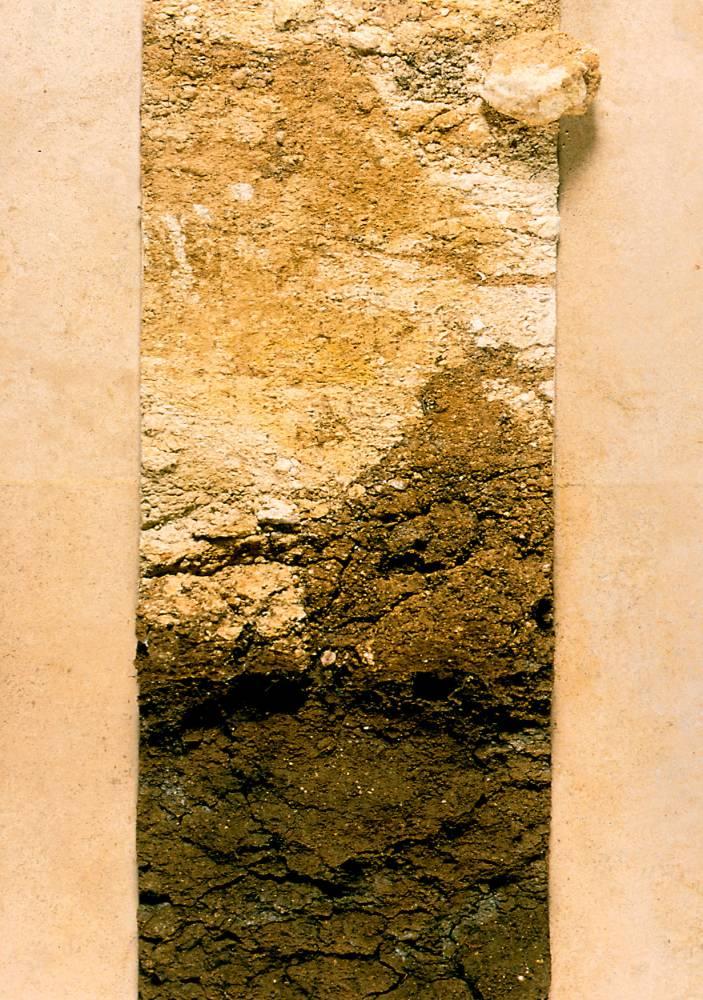 ARGILE SUR ROCHE CALCAIRE © PHILIPPE ROY PHILIPPE ROY / CIVB
