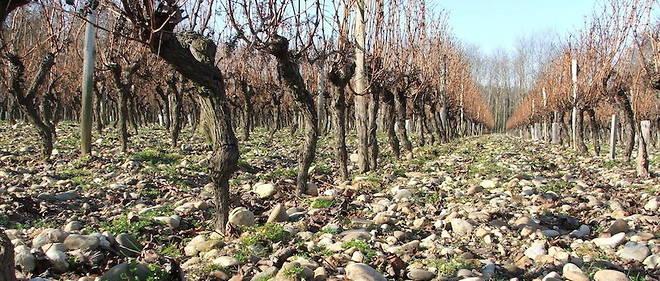 Terroir de graves, vignoble de Bordeaux