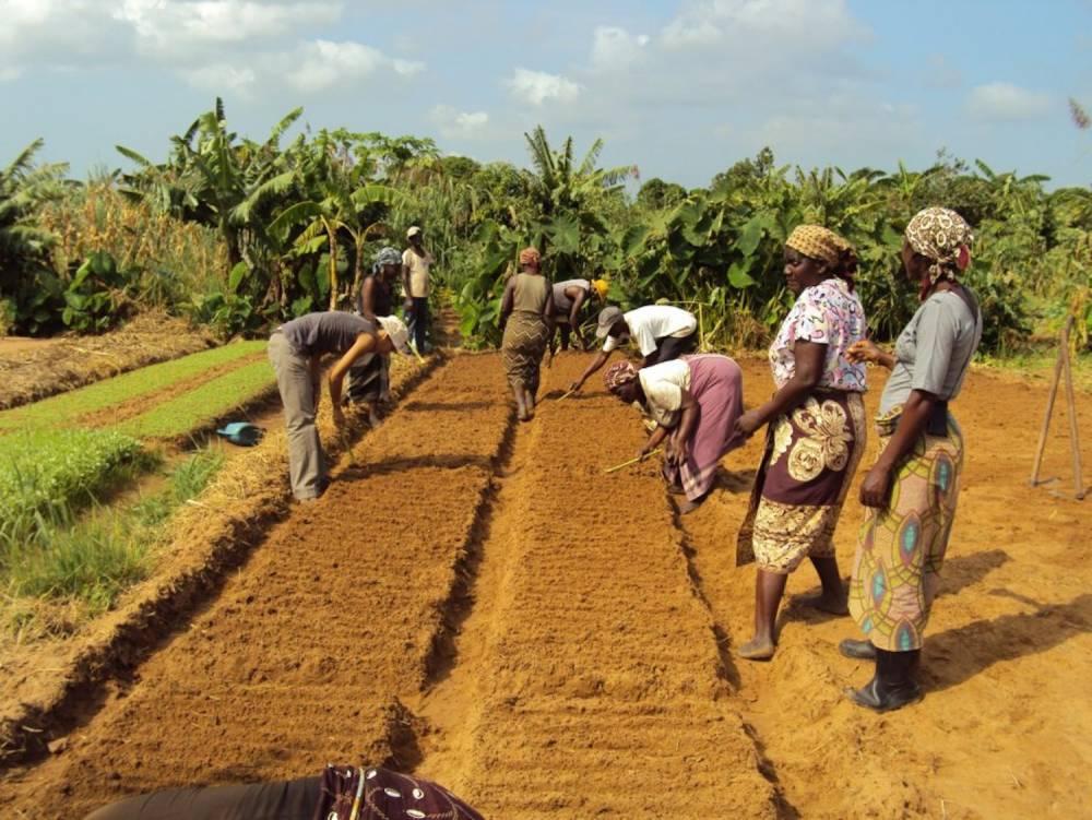 Depuis le lancement du projet il y a un an, 540.000 DUAT ont été distribués par le ministère de la Terre, de l'Environnement et du Développement rural.