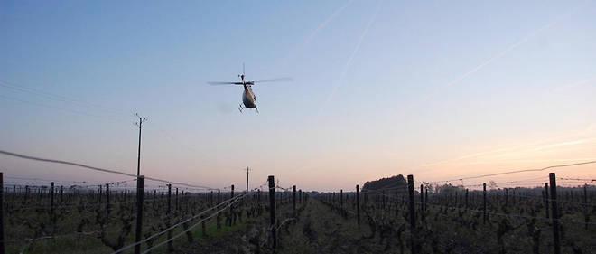 L'hélicoptère au-dessus du vignoble de montlouis-sur-loire le vendredi 7 avril au matin