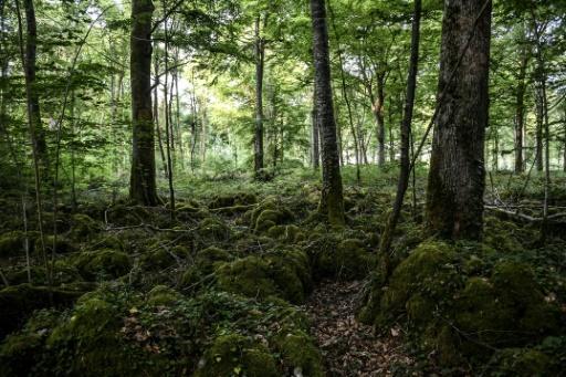 Des arbres du parc national des forêts de Champagne et Bourgogne qui ouvrira en 2019, le 23 mai 2017 près de Châtillon-sur-Seine, en Côte d'Or © PHILIPPE DESMAZES AFP