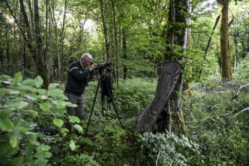 Paul Brossault, technicien à l'Office national des forêts (ONF), observe des oiseaux dans le parc national des forêts de Champagne et Bourgogne, le 23 mai 2017 près de Châtillon-sur-Seine, en Côte d'Or © PHILIPPE DESMAZES AFP