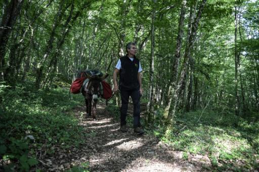 Un promeneur avec son âne dans le parc national des forêts de Champagne et Bourgogne, le 23 mai 2017 près de Châtillon-sur-Seine, en Côte d'Or © PHILIPPE DESMAZES AFP