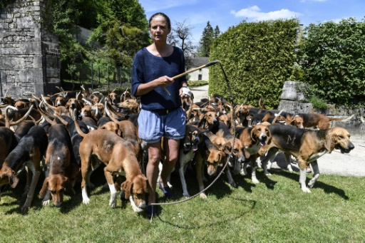 Inès Monot, propriétaire avec son mari Michel de l'abbaye du Val des Choues, avec une meute de chiens de chasse à courre, le 23 mai 2017 près de Châtillon-sur-Seine, en Côte d'Or © PHILIPPE DESMAZES AFP