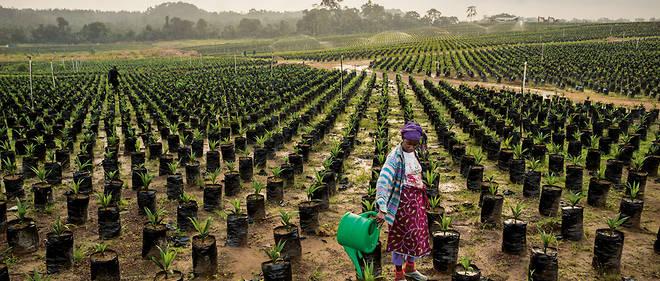 """Résultat de recherche d'images pour """"afrique, matières premières agricoles"""""""