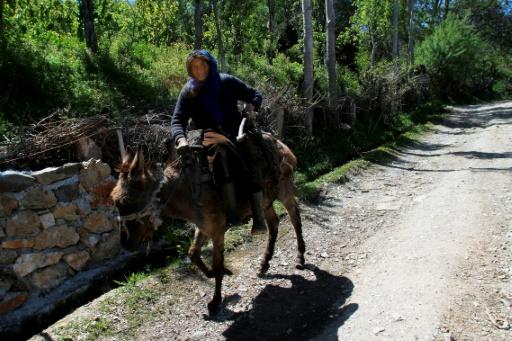 Une femme se déplace sur son âne dans le village de Trebisht, le 26 avril 2017 en Albanie © Gent SHKULLAKU AFP
