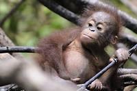 Les espèces de la faune reculent non seulement en termes de nombre, mais également en termes d'étendue sur un territoire géographique. ©BAY ISMOYO