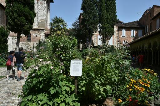 Un exemple de jardin partagé dans le cloitre Sain-Salvi dans la ville d'Albi (Tarn), le 18 juillet 2017 © REMY GABALDA AFP