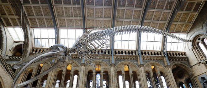 Charlie Edwards, 10 ans, a repéré une erreur de dénomination de l'un des dinosaures du musée.