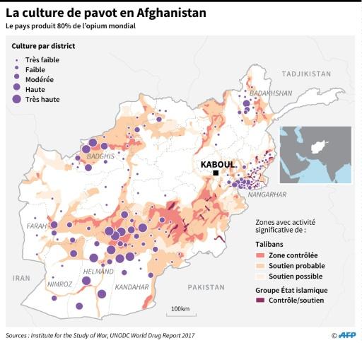 La culture de pavot en Afghanistan © Nick SHEARMAN  AFP