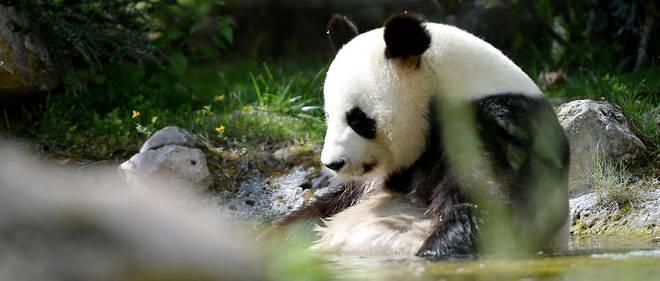La norme veut qu'un zoo paie une redevance d'environ un million de dollars par an pour la location de pandas en provenance de Chine.