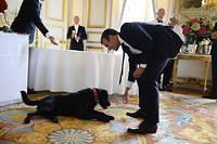 Emmanuel Macron s'amuse avec Némo, le chien que Brigitte et lui ont adopté.