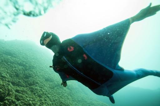 """Pierre Frolla dans """"Oceanwings"""", sa combinaison en néoprène, nage au large de Monaco en Méditerranée le 13 août 2017 © BORIS HORVAT AFP"""