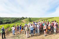 Vignes, Vins, Randos, en Val de Loire en 2016. ©Stevens Frmont