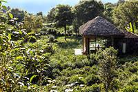 """Le jardin de thé et l'un des pavillons du spa du Bolian Resort de Jingmai (Yunnan). ©Marta Nascimento/REA pour """"Le Point"""""""
