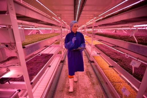 """Une employée, Daiva, sur le site du projet """"Growing Underground"""", à Clapham, dans le sud de Londres le 13 septembre 2017 © Daniel LEAL-OLIVAS AFP"""
