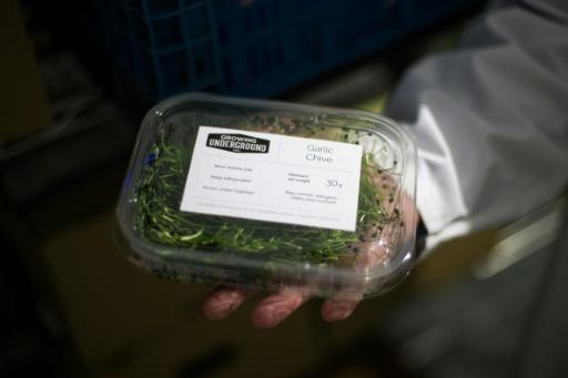 """Un mélange de salades destiné à des supermarchés provenant du projet """"Growing Underground"""", à Clapham, dans le sud de Londres le 13 septembre 2017 © DANIEL LEAL-OLIVAS AFP"""