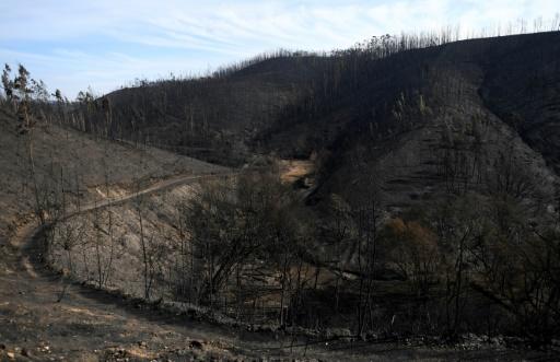 Un secteur calciné à Carregal, au Portugal, en raison de feux de forêts, le 17 octobre 2017 © FRANCISCO LEONG AFP