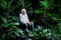 """Vital. Francis Hallé, biologiste et botaniste spécialiste des arbres et des forêts tropicales, dans la serre tropicale du zoo de Montpellier, en octobre. ©Julien Faure pour """"Le Point"""""""