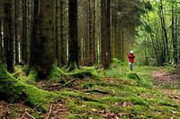 Dans la forêt des Ardennes.