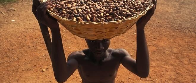 Le cacao certifié équitable a fait son apparition au Canada en 2002. (Image d'illustration d'enfant travaillant dans les plantations, ce qui est interdit dans le concept de cacao équitable.)