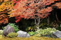Ancestral. C'est en 1982 que le gouvernement japonais a lancé un programme de recherche sur les bienfaits des promenades en forêt, rituel très ancré dans l'archipel. ©Minden/hemis.fr