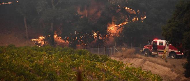 Des pompiers protègent une vigne à Santa Rosa, Californie, octobre 2017.
