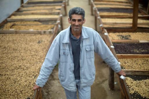 L'agriculteur Afonso Abreu de Lacerda, qui cultive du café de qualité supérieure à Forquilha do Rio, dans la commune de Dores do Rio Preto, au Brésil, le 23 novembre 2017 © MAURO PIMENTEL AFP
