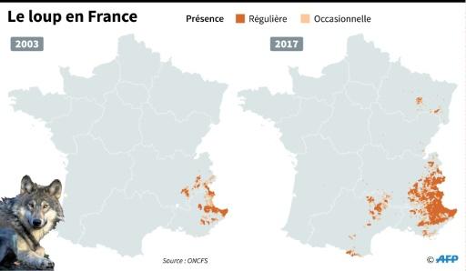 Le loup en France © Simon MALFATTO AFP