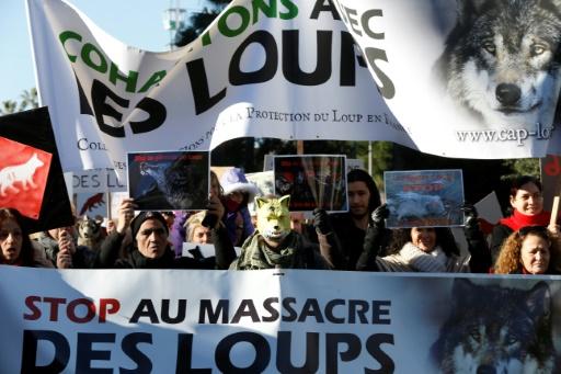 Des militants de la protection du loup en France manifestent à Nice, le 17 janvier 2016 © VALERY HACHE AFP/Archives