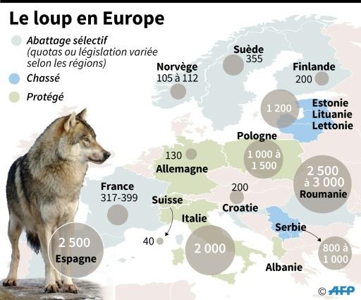 Les loups en Europe © Paul DEFOSSEUX AFP