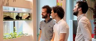 Installation d'une solution d'aquaponie (cercle vertueux entre les poissons et les plantes) en entreprise. (À gauche, les deux créateurs d'Aura.)