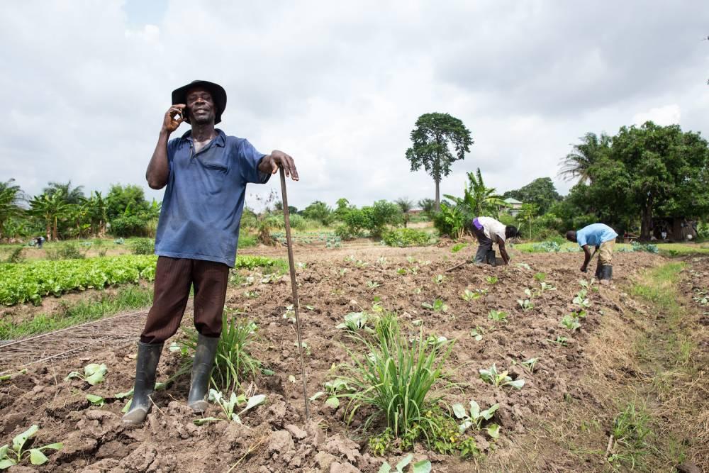 Sam reçoit les mises à jour des prix du marché et de la météo du service Mergdata de Farmerline, ce qui lui permet de planifier sa ferme et de vendre sa laitue à un prix qui ne permettra pas aux intermédiaires d'en profiter. ©  Mwangi Kirubi / King Baudouin Foundation