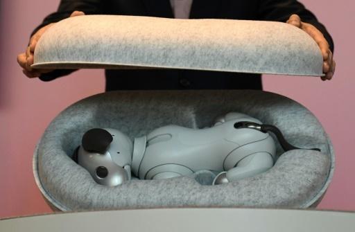 Sony présente dans un écrin son nouveau chien robot Aibo, à Tokyo le 11 janvier 2018 © Kazuhiro NOGI AFP