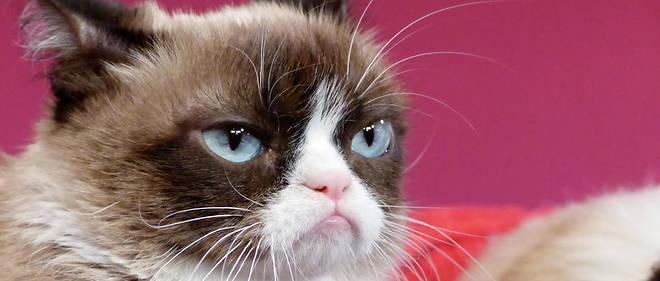 nouveau chat datant écart d'âge approprié datant