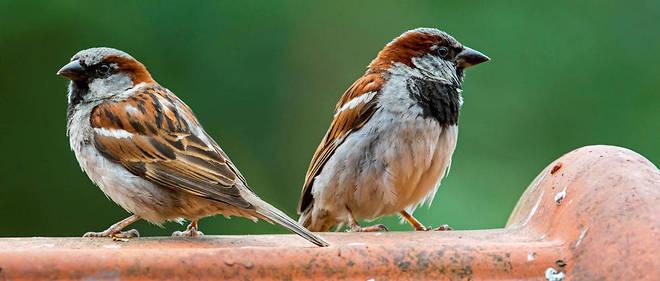 Le chant des oiseaux est gravement affecté par la pollution sonore.