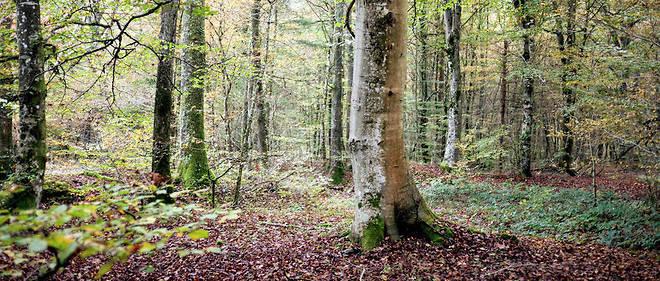 « En pérennisant un espace naturel, en préservant et favorisant la  biodiversité et en participant à la lutte contre le changement  climatique, le projet d'aménagement forestier de la Plaine est un projet  emblématique du XXIe siècle », arguent les tenants de la création de ce  « poumon vert ».